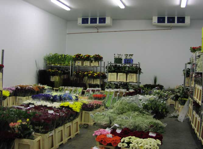 Flowers stored within part of the chamber